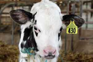 Lancaster PA farmstay