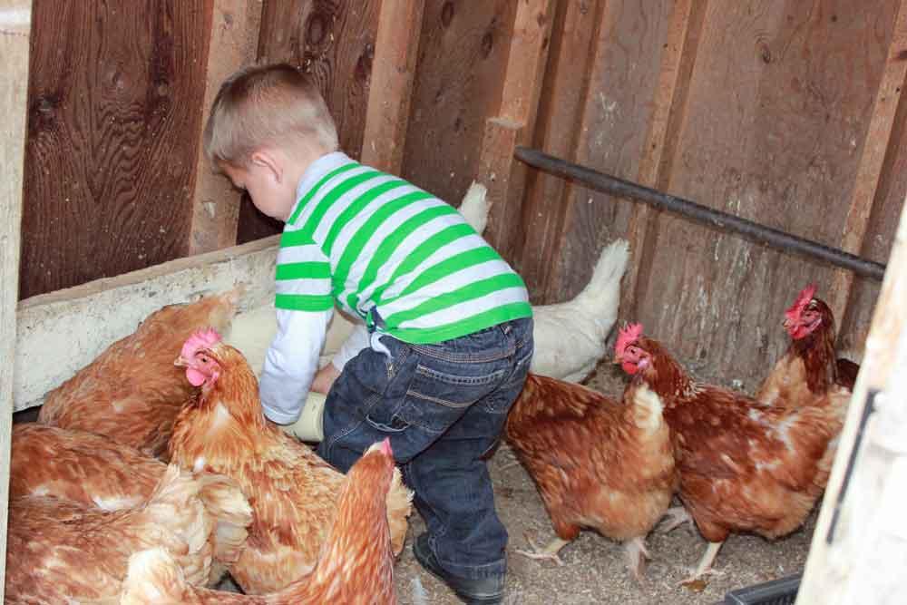 child friendly farm stay Lancaster PA